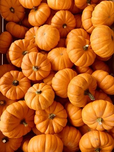 Pumpkin Flowers for Weight Loss