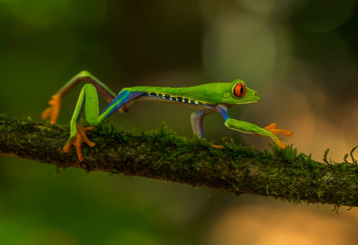 Is Costa Rica Good For Wildlife Photography? Best Wildlife Photography Tours in Costa Rica