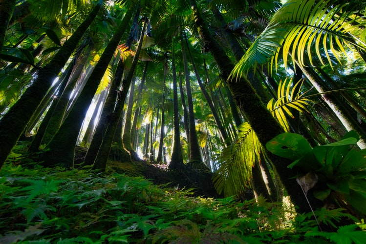 Kid-Friendly Hiking Trails in Hawaii: 10 Family-Friendly Hiking Trails