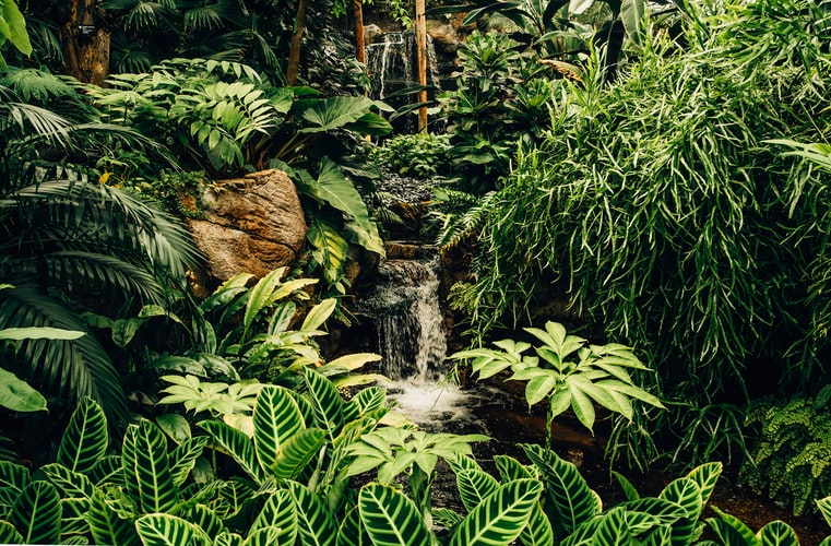 Rainforest Tours in Puerto Rico: A Guide to El Yunque National Forest