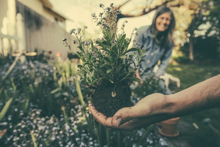 Importance of Gardening: Why Planting is Important