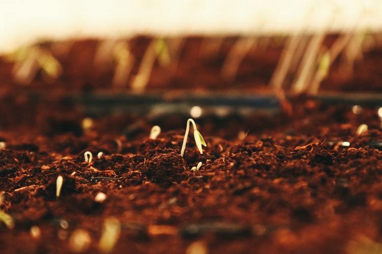 The Art of Sowing Seeds: The Proper Way of Sowing Seeds