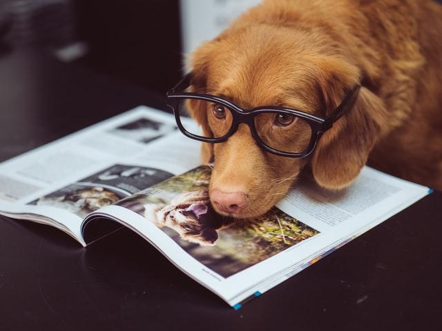dogs, probiotics, yogurt, yoghurt, should i feed my dog yogurt, feeding dogs yogurt, benefits of yogurt for dogs, side effects of yogurt for dogs, dogs and yogurt, feeding dogs, caring for dogs, how much yogurt to feed dog