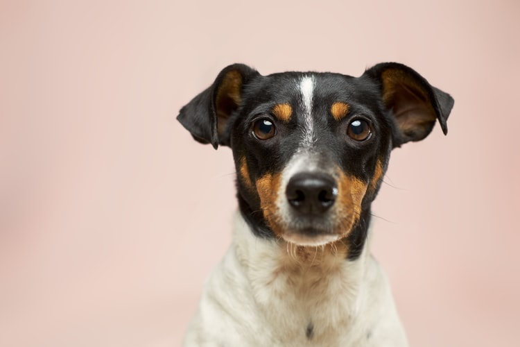 What Can I Substitute For Dog Shampoo? Alternatives For Dog Shampoo