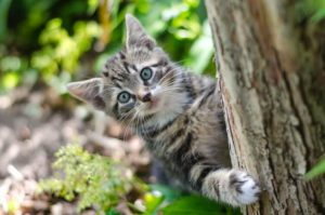 cats, vegetables, vegetables for cats, safe vegetables for cats, can cats eat vegetables, best vegetables for cats, vegetables to avoid for cats, harmful vegetables for cats, toxic vegetables for cats