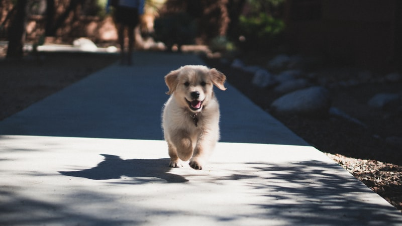 Why Do Puppies Eat Poop? How to Get Them to Stop? (Answered)