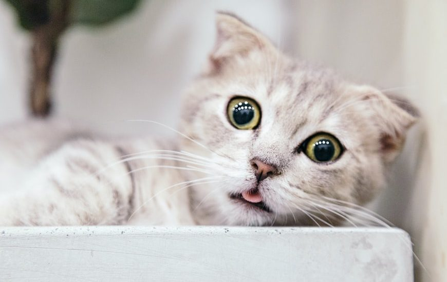 Can Cats Eat Vegetables? 17 Cat-Friendly Vegetables and 9 to Avoid