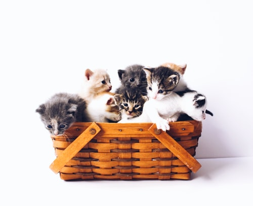 cats, fruits, safe fruits for cats, fruits to avoid for cats, what fruits are good for cats, what fruits can cats eat, how to feed cats fruits, is fruits good for cats, best fruits for cats, toxic fruits for cats